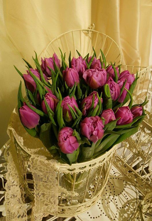 Tulpes lillā-pildītās