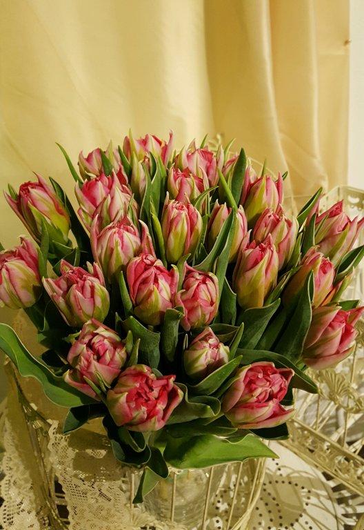 Tulpes balti rozā-pildītās