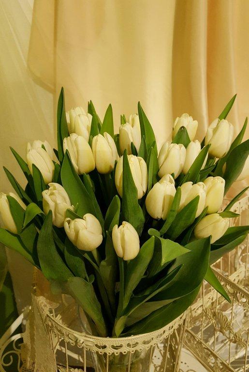 Tulpes baltas