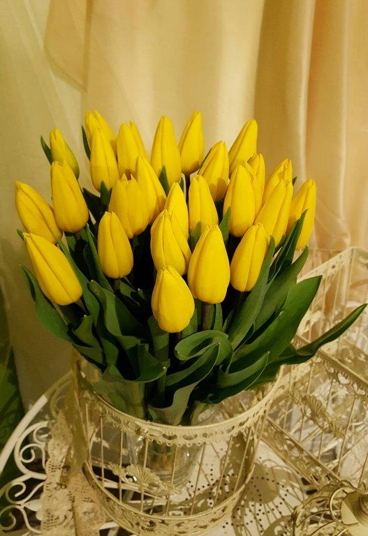 Tulpes dzeltenas n9