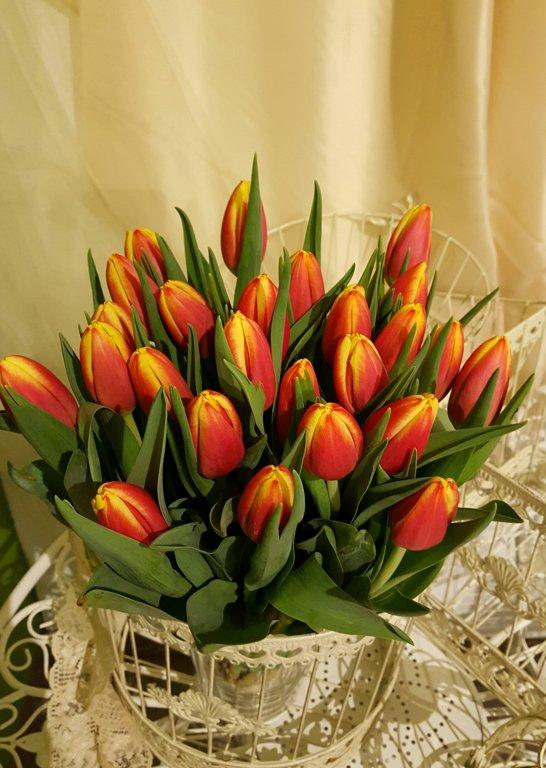 Tulpes orandžas-dzeltenas